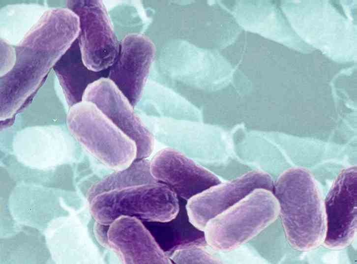 https://duniatehnikku.files.wordpress.com/2011/09/bacteria.jpg?w=300