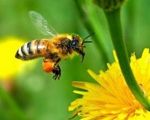 https://duniatehnikku.files.wordpress.com/2011/09/honeybee2.jpg?w=300